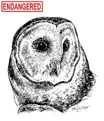 Where Does The Barn Owl Live Deep Barn Owl Fact Sheet