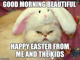 Good Morning Beautiful Meme - easter cat imgflip