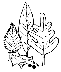 leaves black and white pumpkin leaf black and white clipart