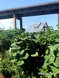 Urban Vegetable Garden by Garden Travels Urban Vegetable Garden With A Touch Of Whimsy