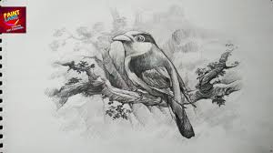 how to draw a bird with pencil drawing shading youtube