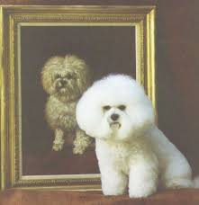 bichon frise names male history of the bichon frise u2013 bichon frise club of america
