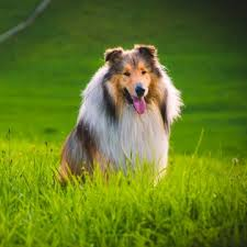 the 10 best dogs for and families petmd