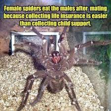 23 Funny Spider Memes Weneedfun - funny spider meme funny memes