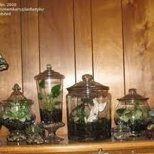aquarium to terrarium dave u0027s garden