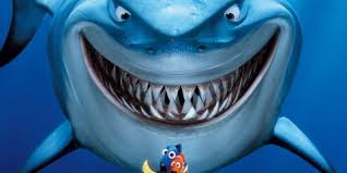 diver photographs u0027finding nemo u0027 shark business insider