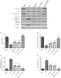 frontiers coq10 augments rosuvastatin neuroprotective effect in