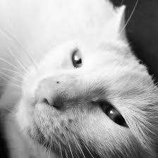 Cat Instagram Sassy Cat Instagram By Forbidden Feline On Deviantart
