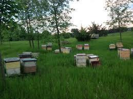 Backyard Beehive Honeybees For Sale Nucs For Sale Beehives For Sale Hives For