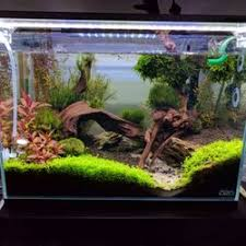 Aquascape Shop Nature Aquarium 81 Photos U0026 92 Reviews Local Fish Stores