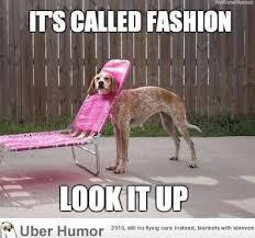 Meme Chair - funny dog fashion meme