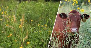 grassland native plants dig deeper blog hamilton native outpost