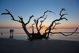 Jekyll Island Map 3 Low Cost And Free Things To Do On Jekyll Island