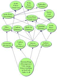 what travels through a food chain or web images Arctic tundra ecosystem food web diagram tundra food web jpg