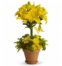 Flower Shops In Greensboro Nc - order fresh summer flowers from nc u0027s premier flower shop designs