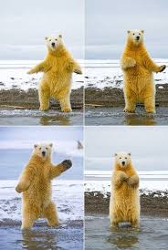 Polar Bear Meme - polar bear dancing
