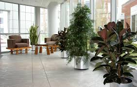 Masters Degree In Interior Design by Reading Ma Interior Landscaping Office Plant Care Service And