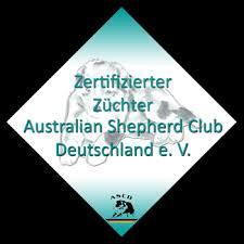 australian shepherd zucht deutschland crystalclouds australian shepherd zucht
