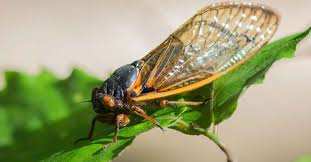 Garden Pests Identification - plant pest detective identifying common plant pests