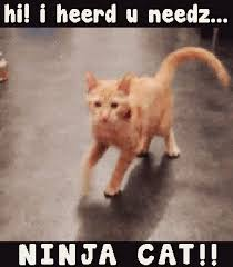 Funny Meme Gifs - image hi i heard u needz ninja cat funny cat meme gif gif