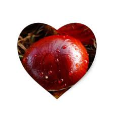 conker gifts on zazzle