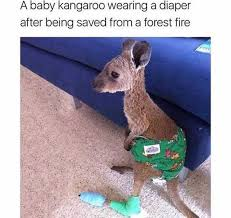 Baby Diaper Meme - dopl3r com memes a baby kangaroo wearing a diaper after being