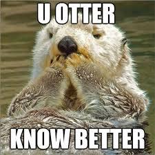 Sea Otter Meme - amazing 29 sea otter meme wallpaper site wallpaper site