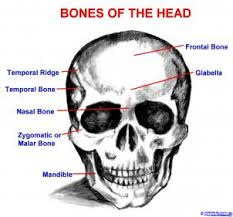 how to draw a skull human skull by skulls