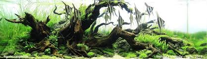Amano Aquascaping Simon U0027s Aquascape Blog