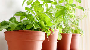 herb herbs 101 how to cut store and cook with fresh herbs today com