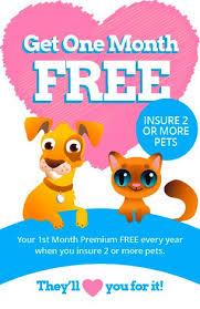 1 month old bichon frise bichon frise pet insurance affordable pet insurance