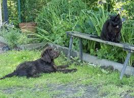 comment empecher mon chien de monter sur le canapé comment éviter les dégâts au jardin avec les animaux de compagnie