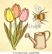 clipart vector of sketch tulip bee and watering can vector