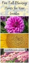 1132 best flower garden ideas images on pinterest flower