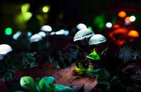 outdoor mushroom lights visualia festival