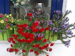 herbstbepflanzung balkon herbstbepflanzung planen donnerwetter de