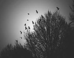 birds flying away by icecreamtruckfuck on deviantart
