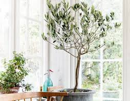 beautiful house plants the best and most beautiful house plants for cleaner air laurel home