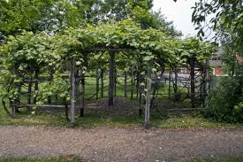 Trellis With Vines Entrance Of Wooden Trellis Supporting Growth Of Grape Vines