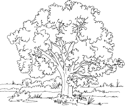 apple tree template dgn without leaves coloring pages inside