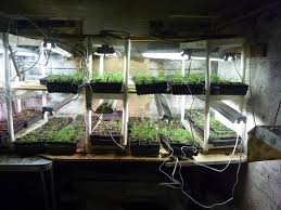 the basement nursery farming in the city pinterest sprouts