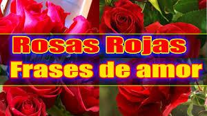 bonitas de rosas rojas con frases de amor imagenes de amor facebook rosas rojas con frases de amor imagenes muy romanticas youtube