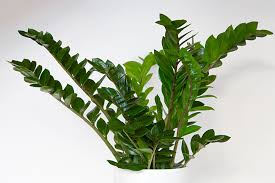 plants that need low light the best houseplants for low light spaces peevler real estate