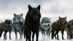 post your favorite picture of with any of the wolf pack in