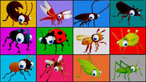 insects for children learn bugs names animation babies toddlers