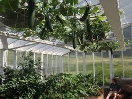greenhouse design homemade food junkie