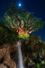 tree of moon matthew cooper photography