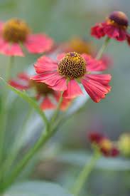 beautiful garden movie 2472 best garden images on pinterest flowers photography photos