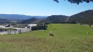 dog friendly simi valley ca
