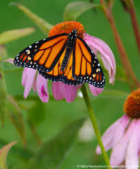 butterfly marty nevils davis photography butterflies